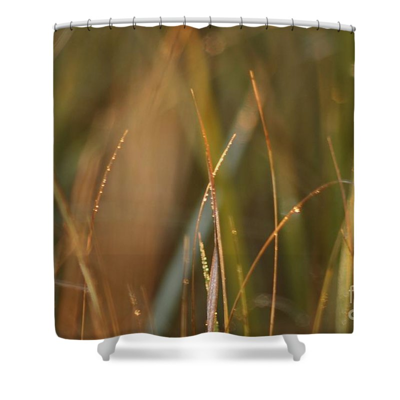 Dew Shower Curtain featuring the photograph Dewy Grasses by Nadine Rippelmeyer