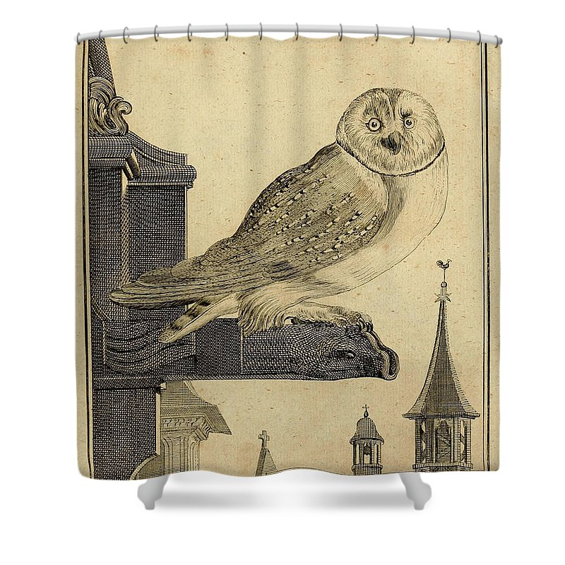 Die Shower Curtain featuring the drawing Die Schleyer Eule by Philip Ralley