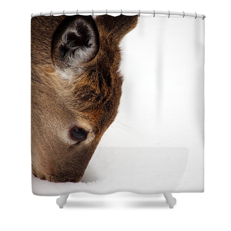 Deer Shower Curtain featuring the photograph Digging by Karol Livote