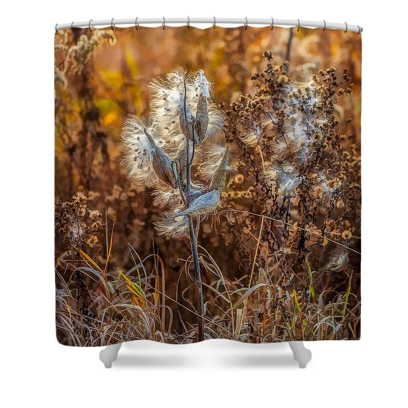 Weeds Shower Curtain featuring the photograph Ditch Beauty by Steve Harrington