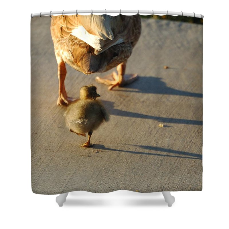 Feathers Shower Curtain featuring the photograph Do What I Do 27708 by Jerry Sodorff