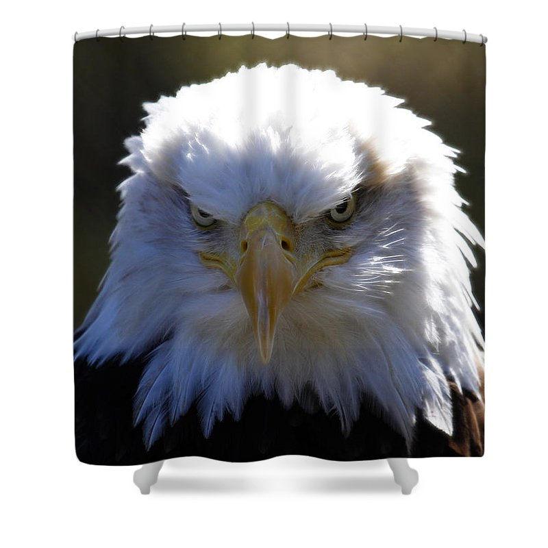 Bald Eagle Shower Curtain featuring the photograph Do You Feel Lucky? by Steve McKinzie