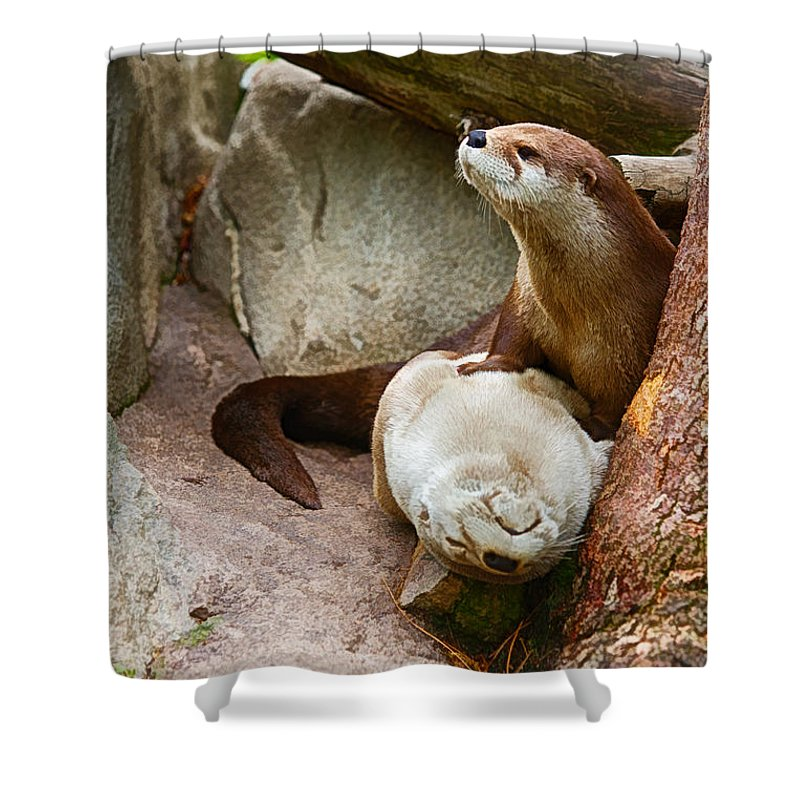 Otter Shower Curtain Featuring The Photograph Doctor At Western North Carolina Nature Center By