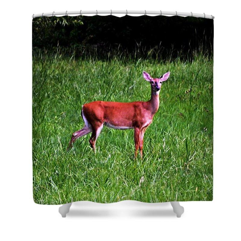 Doe Shower Curtain featuring the photograph Doe A Deer by Tara Potts