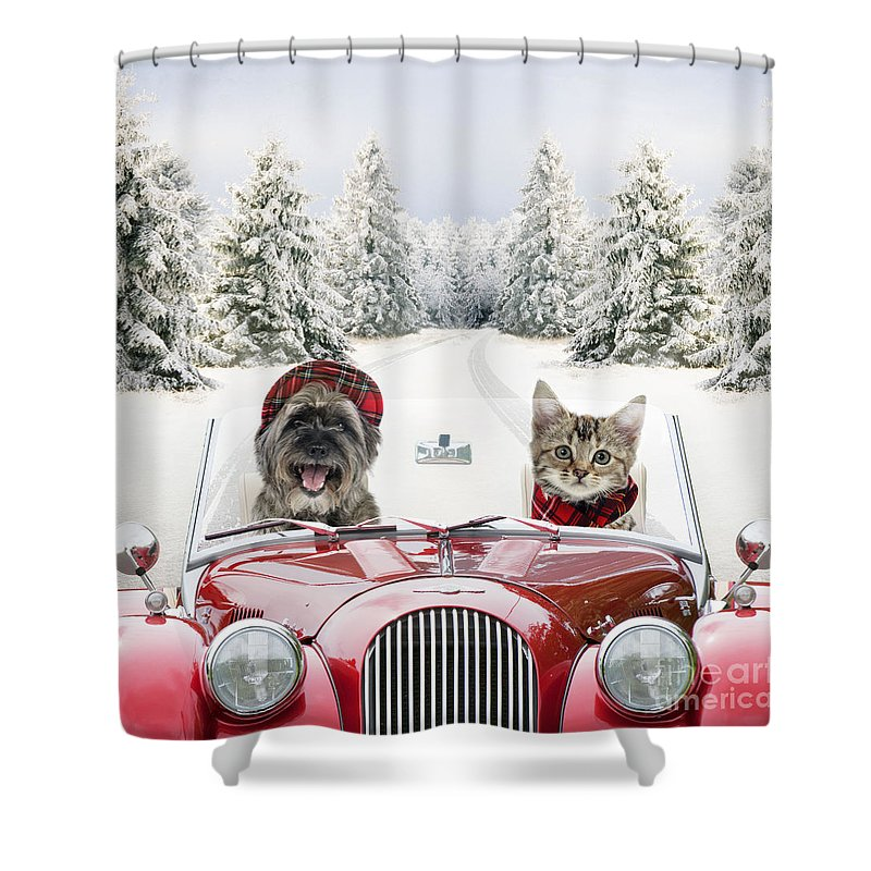 Animal Shower Curtain Featuring The Photograph Dog And Cat Driving Car Through Snow By John Daniels