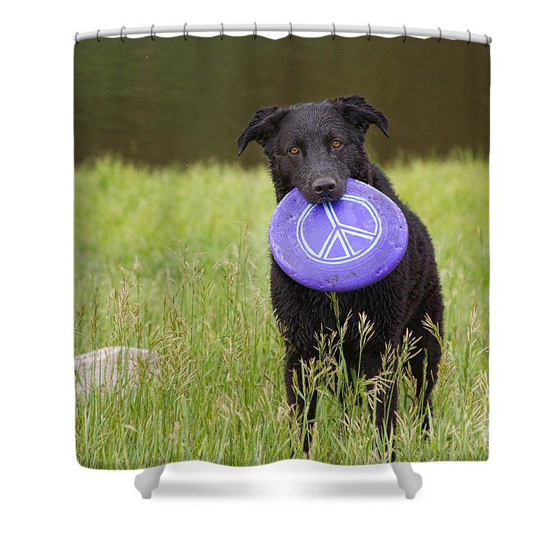Dog Shower Curtain featuring the photograph Dogs For Peace Too by James BO Insogna
