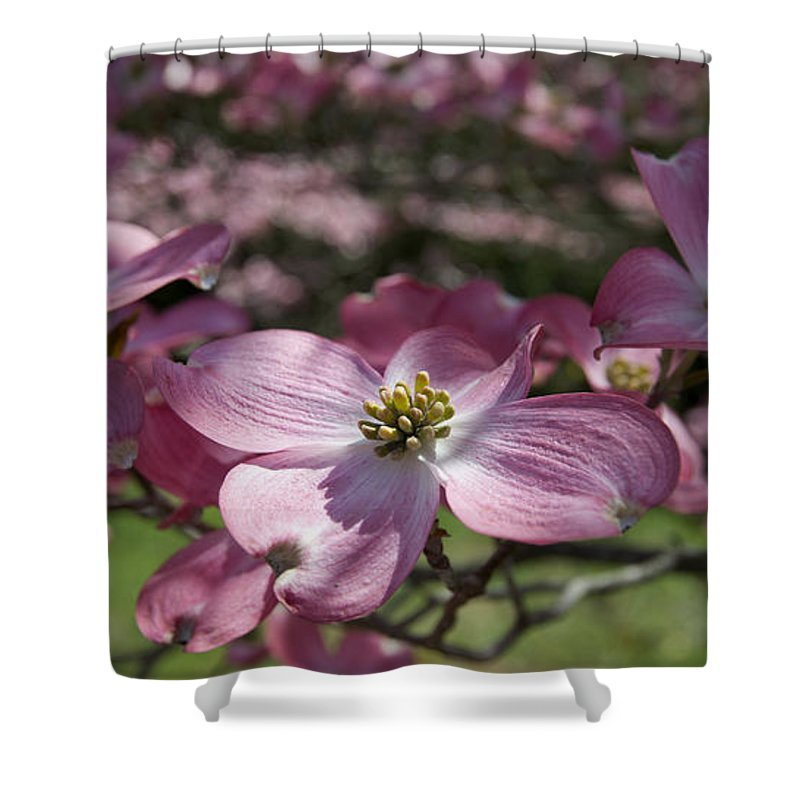 Spring Flowers Shower Curtain featuring the photograph Dogwood 5576 by Terri Winkler