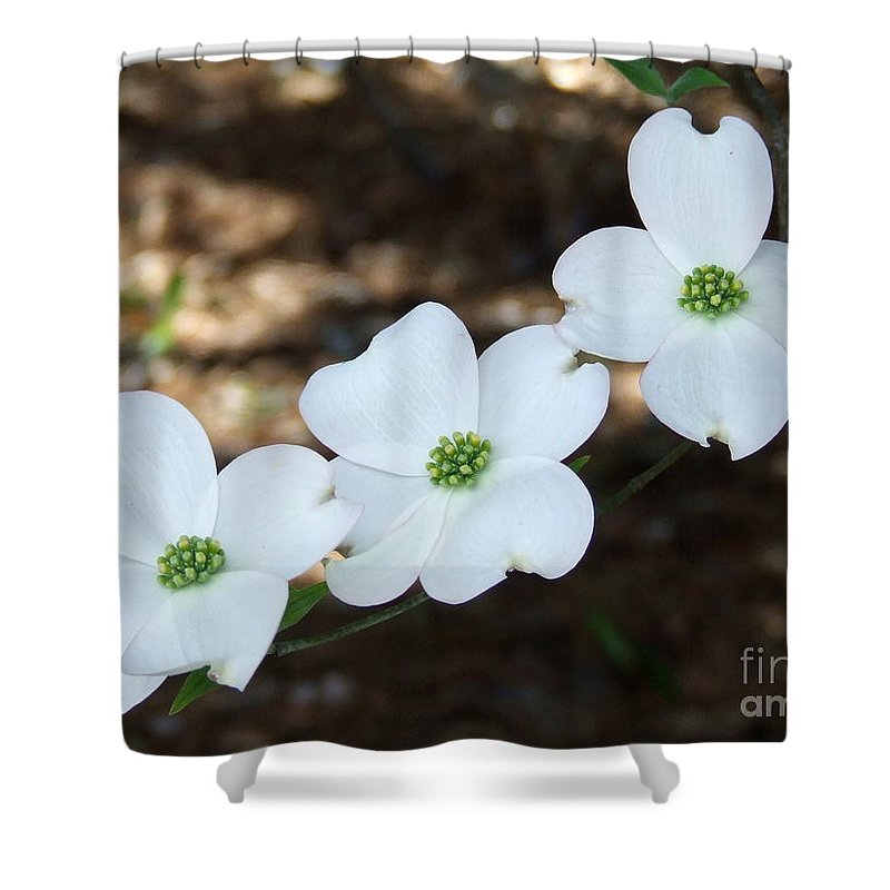 Dogwood Shower Curtain featuring the photograph Dogwood by Andrea Anderegg