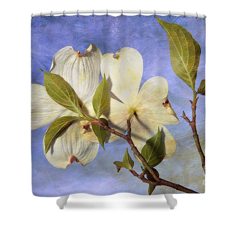 Texture Shower Curtain featuring the photograph Dogwood Blossoms And Blue Sky - D007963-b by Daniel Dempster