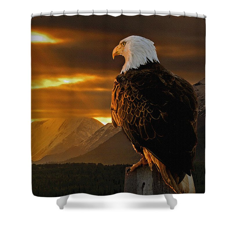 Eagle Shower Curtain featuring the photograph Domain by Ron Day