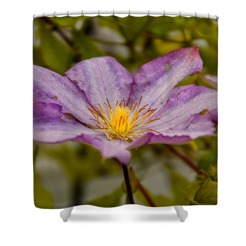 Purple Shower Curtain featuring the photograph Donna's Purple Flower by Thomas Woolworth