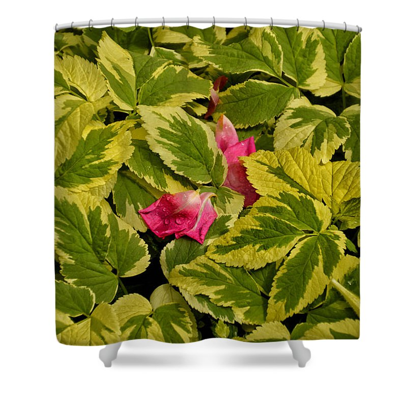 Donna Shower Curtain featuring the photograph Donna's Rose Petals by Thomas Woolworth