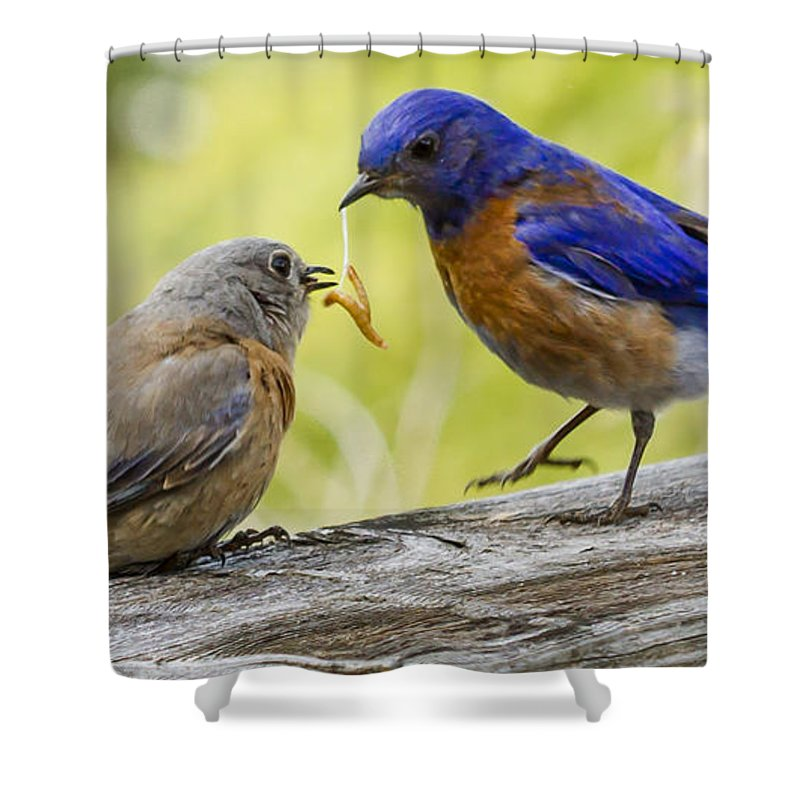 Animals Shower Curtain featuring the photograph Dont Drop It by Jean Noren