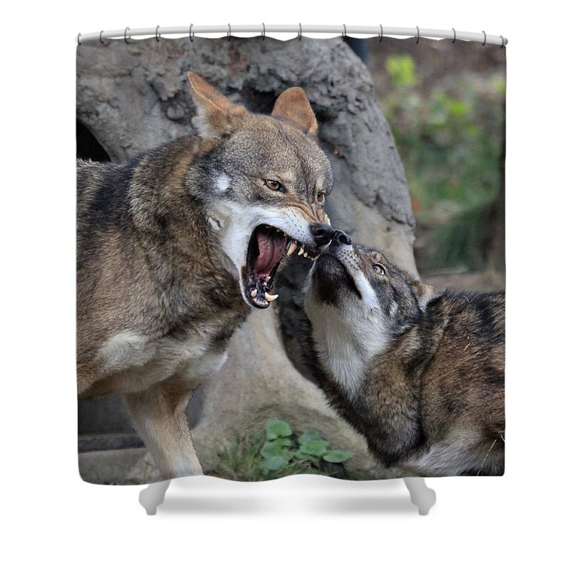 Wolves Shower Curtain featuring the photograph Don't Mess With Me by Athena Mckinzie