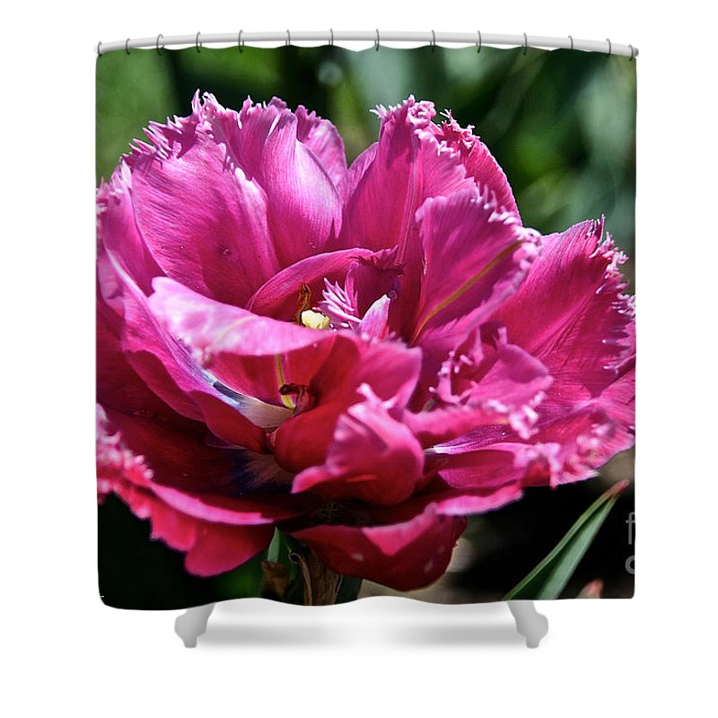 Flower Shower Curtain featuring the photograph Double Pink Fringe by Susan Herber