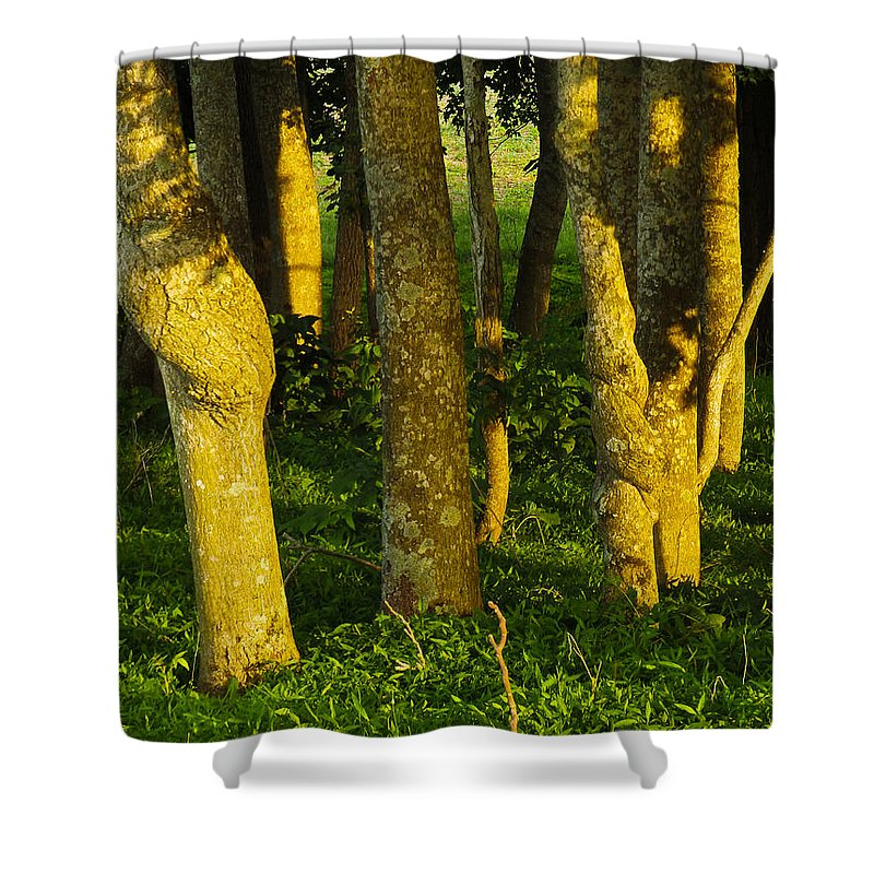 Twist Shower Curtain featuring the photograph Double Twist by Nick Kirby