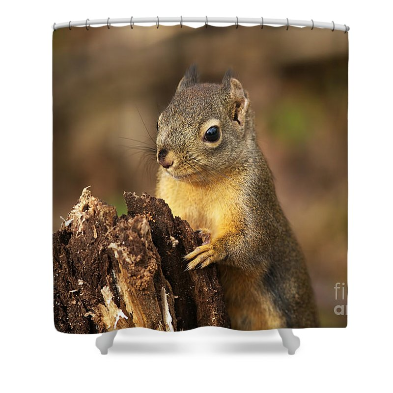 Douglas Squirrel Shower Curtain featuring the photograph Douglas Squirrel On Stump by Sharon Talson