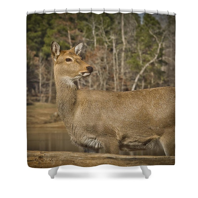 Wildlife Shower Curtain featuring the photograph Down By The Duck Pond by Kim Henderson
