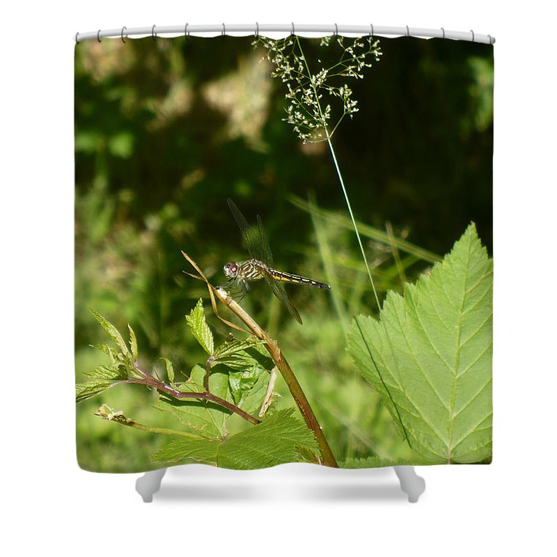 Dragon Shower Curtain featuring the photograph Dragon Fly I by Nicki Bennett