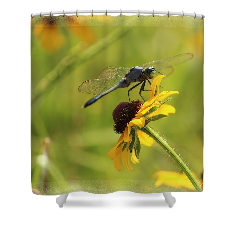 Dragonfly Shower Curtain featuring the photograph Dragonfly by Karen Beasley