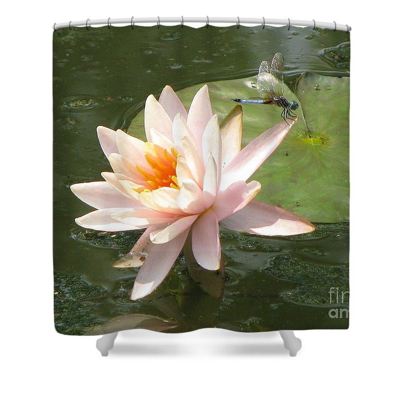 Dragon Fly Shower Curtain featuring the photograph Dragonfly Landing by Amanda Barcon