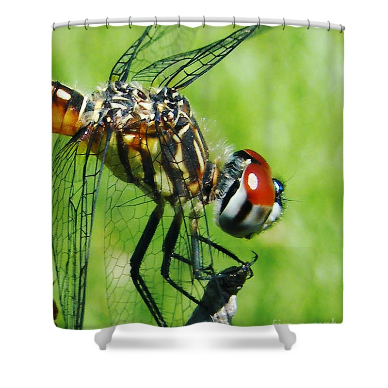 Dragonfly Shower Curtain featuring the photograph Dragonfly by Lizi Beard-Ward