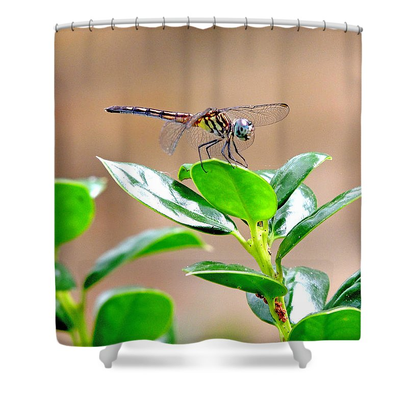 Damselflies Shower Curtain featuring the photograph Dragonfly by Marilyn Holkham