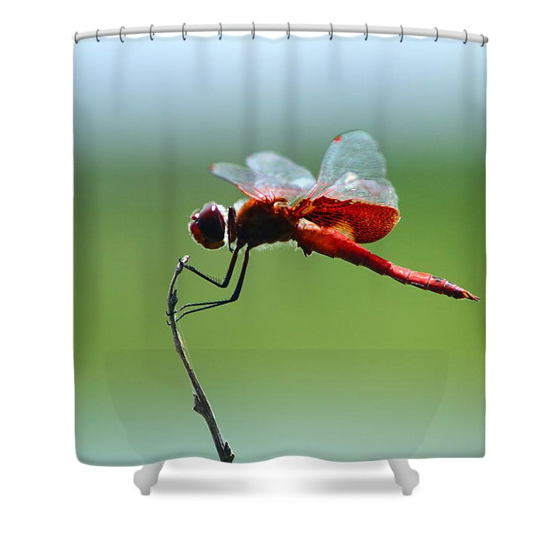 New Orleans Shower Curtain featuring the photograph Dragonfly by Susie Hoffpauir