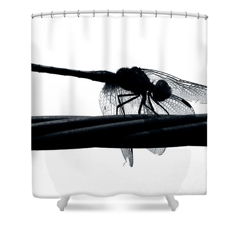 Dragon Shower Curtain featuring the photograph Dragons Silhouette by Art Dingo