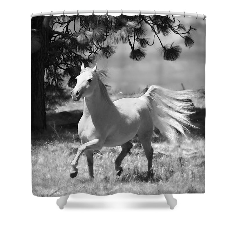 Dream Horse Shower Curtain featuring the photograph Dream Horse by Wes and Dotty Weber