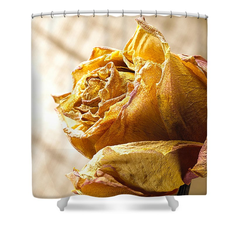 Flower Shower Curtain featuring the photograph Dried Yellow Rose by Daniel Troy
