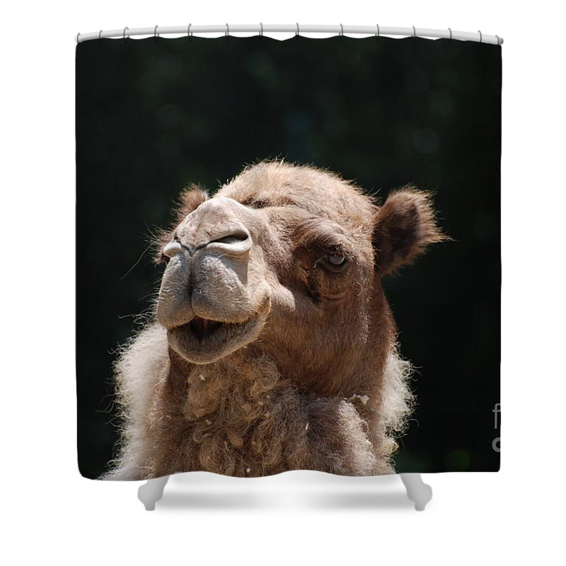 Camel Shower Curtain featuring the photograph Dromedary Camel Face by DejaVu Designs