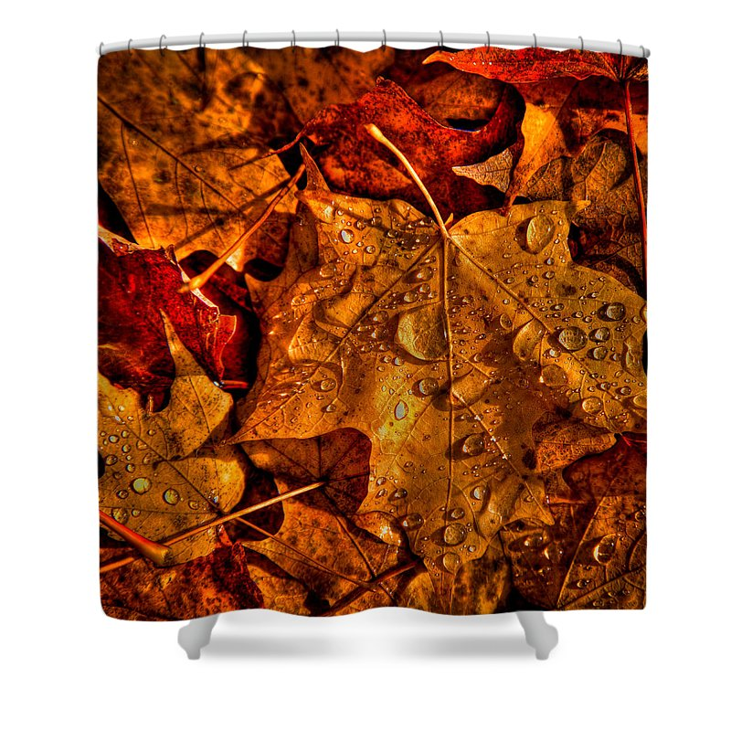 Autumn Shower Curtain featuring the photograph Droplets Of Autumn by David Patterson