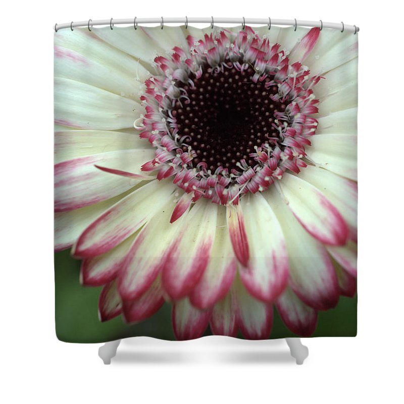Gerber Shower Curtain featuring the photograph Dsc339-001 by Kimberlie Gerner