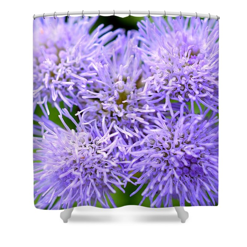 Colorful Shower Curtain featuring the photograph Dsc499d-001 by Kimberlie Gerner