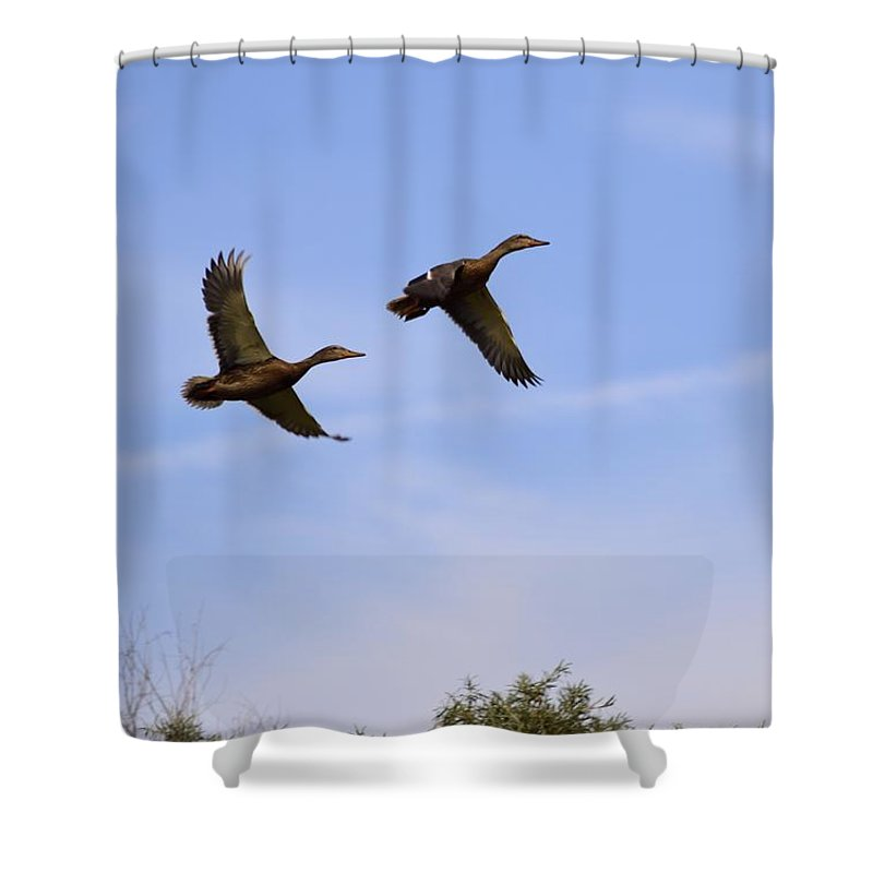 Duck Shower Curtain featuring the photograph Duck Moon by Bonfire Photography