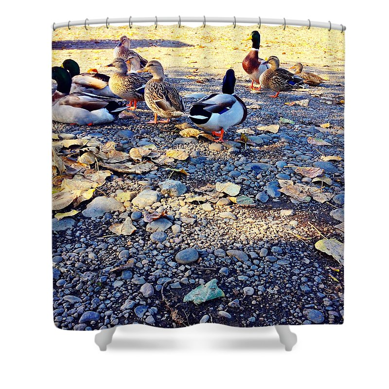 Duck Shower Curtain featuring the photograph Duck Parade On The Beach by Anna Porter