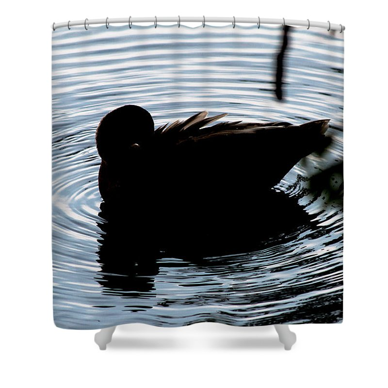 Duck Shower Curtain featuring the photograph Duck Waves by Gaurav Singh