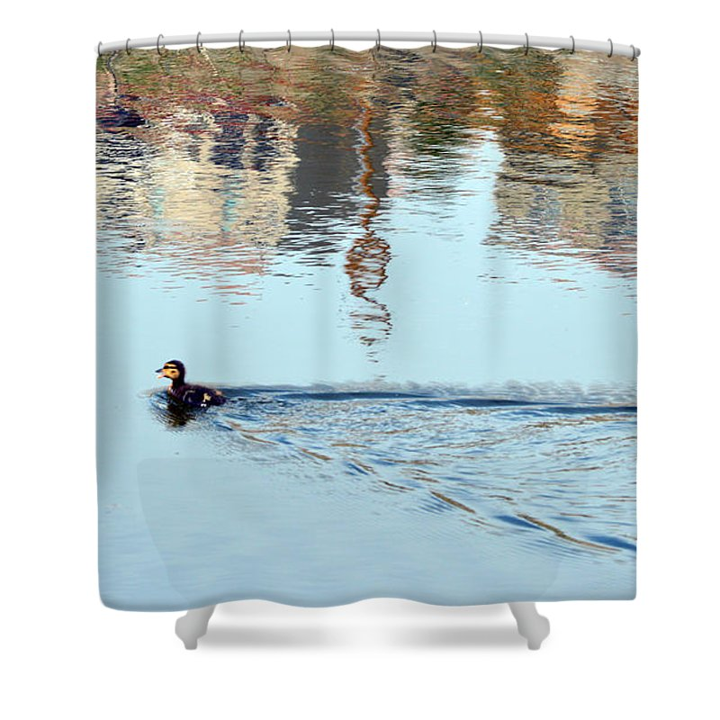 Duck Shower Curtain featuring the photograph Duckling by Brent Dolliver