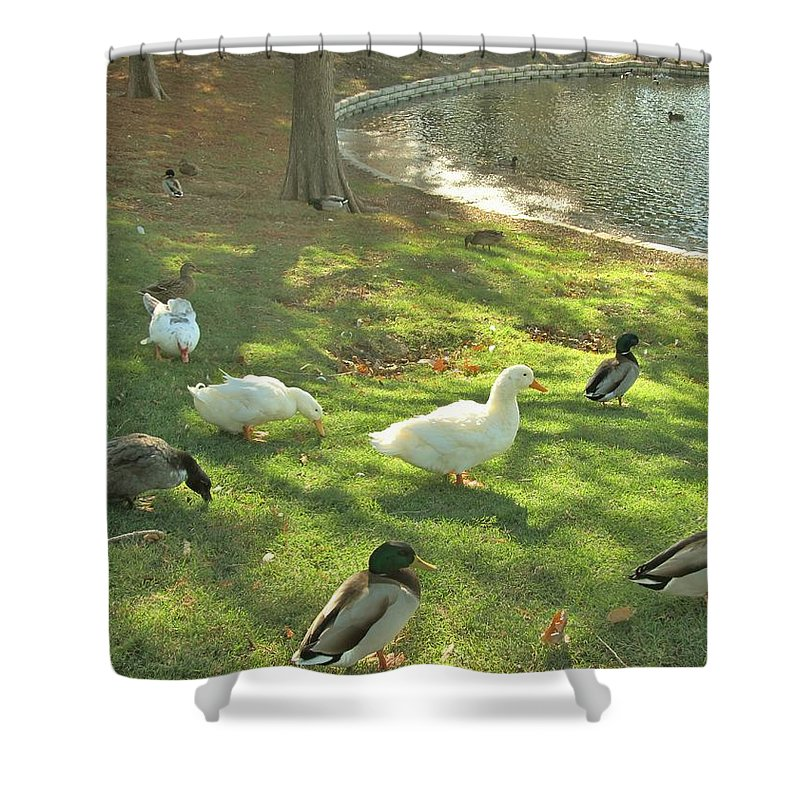 Ducks Shower Curtain featuring the photograph Ducks At The Park by Donna Wilson