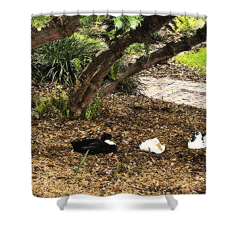 Fresco Shower Curtain featuring the photograph Ducks Resting Fresco by Csaba Friss