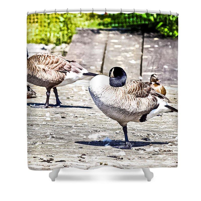 Dock Shower Curtain featuring the photograph Ducky Dance by David Fabian