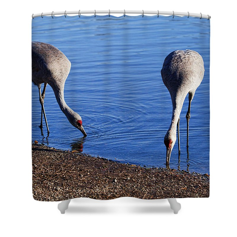 Sandhill Cranes Shower Curtain featuring the photograph Duo by Karen Ulvestad