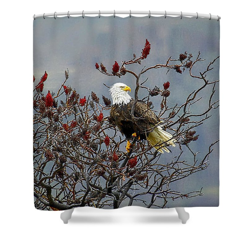 Bald Eagle Shower Curtain featuring the photograph Eagle Tree by Steve McKinzie