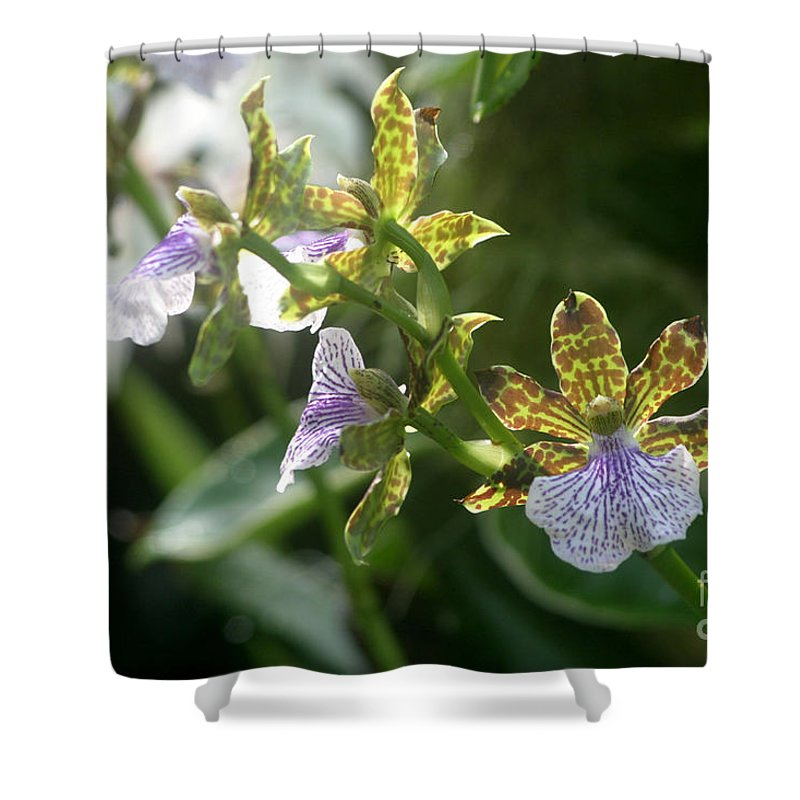 Orchids Shower Curtain featuring the photograph Early Morning Light by Living Color Photography Lorraine Lynch