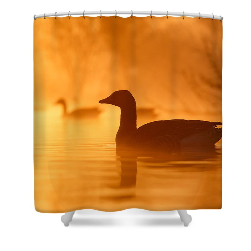 Goose Shower Curtains