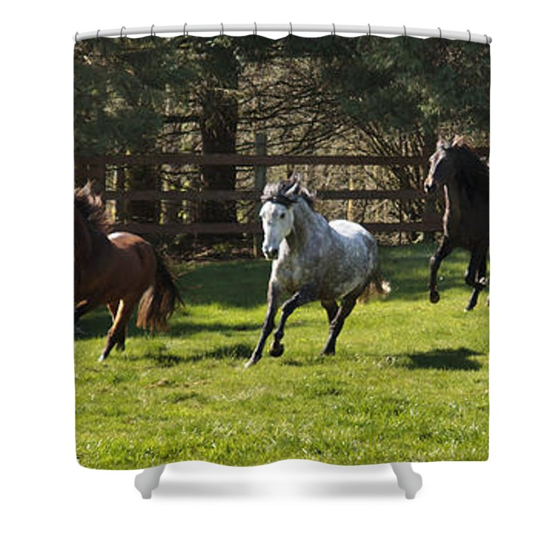 Early Morning Romp Shower Curtain featuring the photograph Early Morning Romp by Wes and Dotty Weber