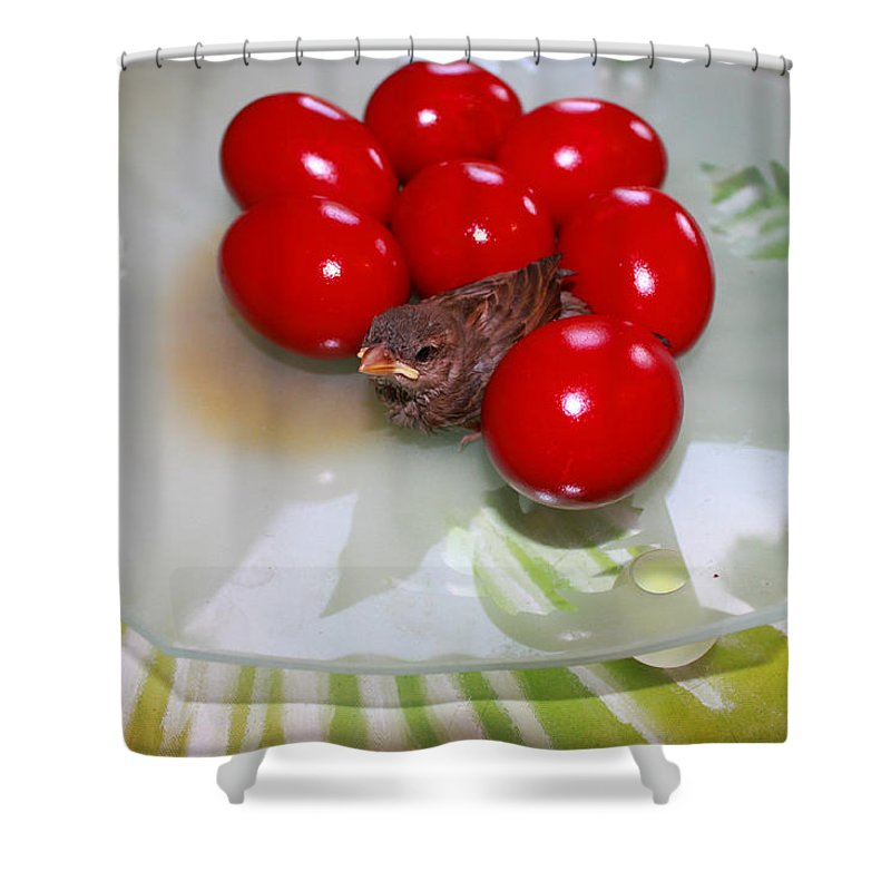 Augusta Stylianou Shower Curtain featuring the photograph Easter And Sparrow by Augusta Stylianou