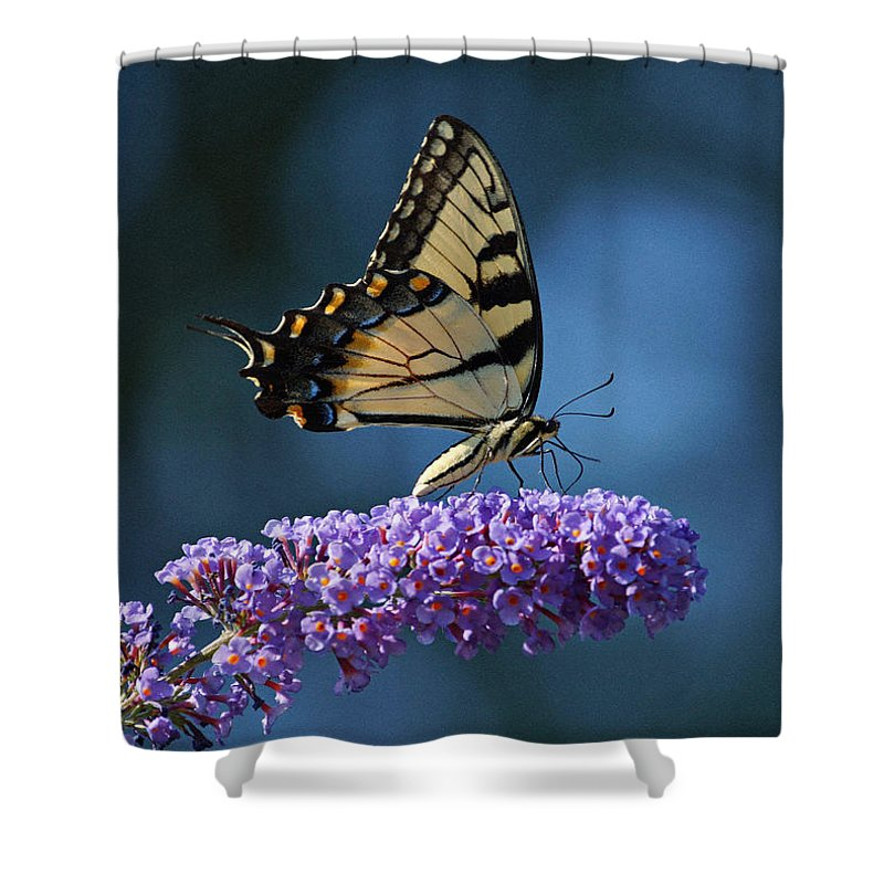 Butterfly Shower Curtain featuring the photograph Eastern Tiger Swallowtail Butterfly by Sandy Keeton