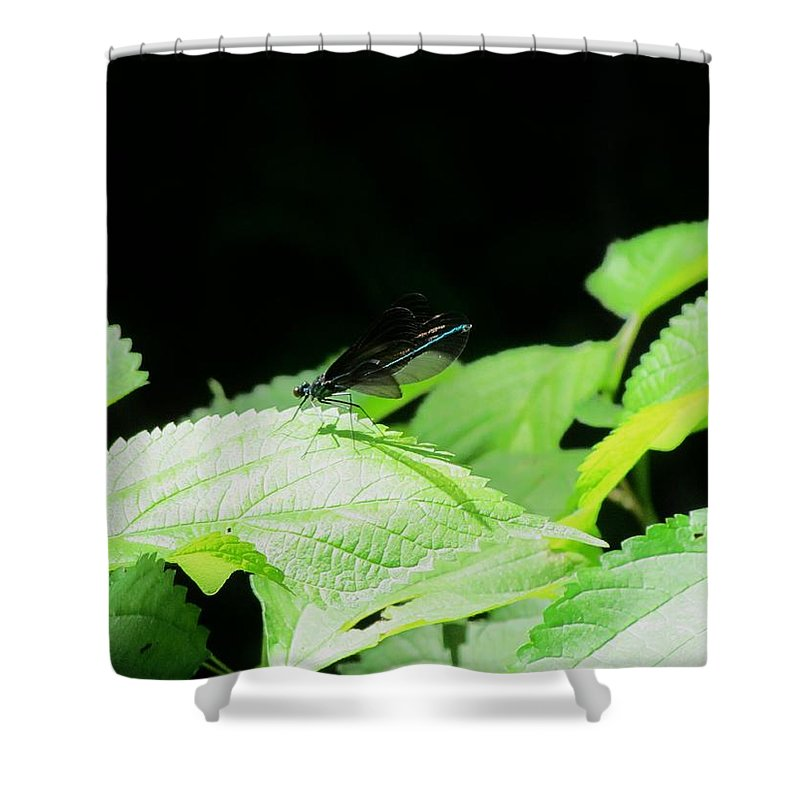 Dragonflies Shower Curtain featuring the photograph Ebony Jewelwing Male by Eric Noa